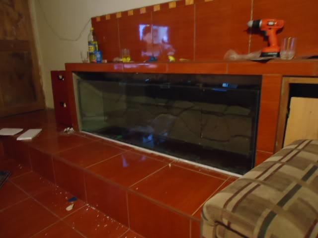 nuevo proyecto acuario empotrado ciclidos DSC02145