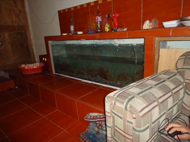 nuevo proyecto acuario empotrado ciclidos DSC02164