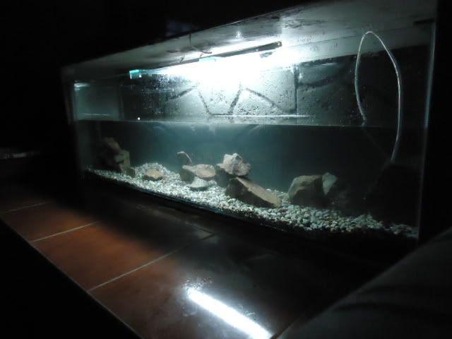 nuevo proyecto acuario empotrado ciclidos DSC02170