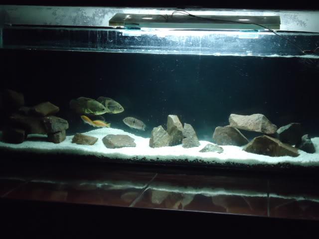mi nuevo acuario empotrado ciclidos DSC02207