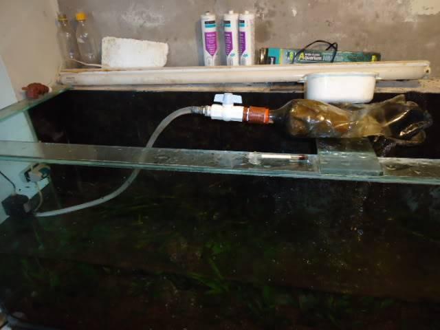 nuevo proyecto acuario empotrado ciclidos - Página 2 DSC02457