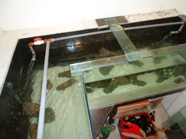 """acuario en  """"L """"  1600 litros etapa final - Página 2 DSC02762"""