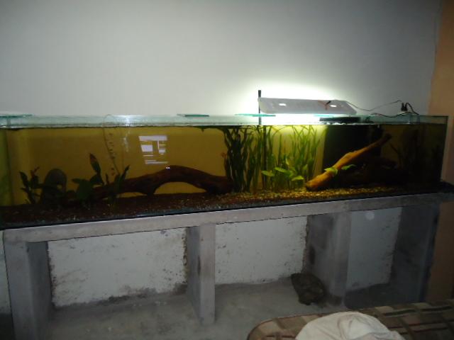 mi acuario semi plantado .. Acuario