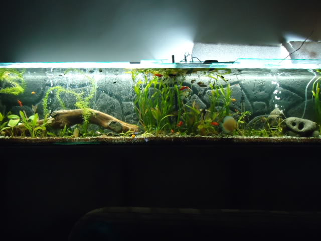 mi acuario semi plantado .. Armadodelacuarioxtremo053