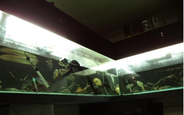 "acuario en  ""L ""  1600 litros etapa final - Página 4 L3_zpsb4c22b74"