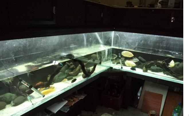 """acuario en  """"L """"  1600 litros etapa final - Página 4 L4_zps7ab1502c"""