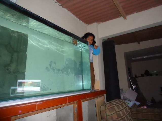 mi nuevo acuario de 220x80x40  largo,alto.ancho...ave fenix Nuevoacuario010