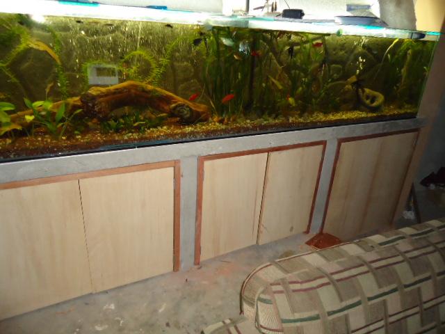 mi acuario semi plantado .. Untitled