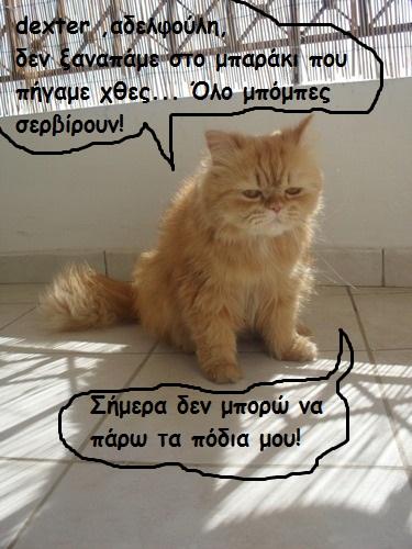 """Οι """"μαύρες"""" σκέψεις μιας γάτας... Μήπως η γάτα έχει κάτι να μας πει; - Σελίδα 3 B001--"""