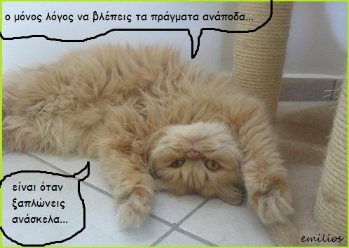 """Οι """"μαύρες"""" σκέψεις μιας γάτας... Μήπως η γάτα έχει κάτι να μας πει; C061---1"""