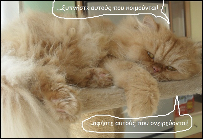 """Οι """"μαύρες"""" σκέψεις μιας γάτας... Μήπως η γάτα έχει κάτι να μας πει; D010--"""