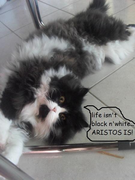 """Οι """"μαύρες"""" σκέψεις μιας γάτας... Μήπως η γάτα έχει κάτι να μας πει; Ertm238--1"""