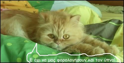 """Οι """"μαύρες"""" σκέψεις μιας γάτας... Μήπως η γάτα έχει κάτι να μας πει; Gfsh084--"""