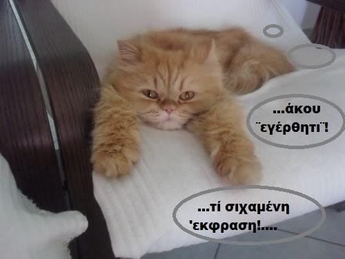 """Οι """"μαύρες"""" σκέψεις μιας γάτας... Μήπως η γάτα έχει κάτι να μας πει; H075---1"""