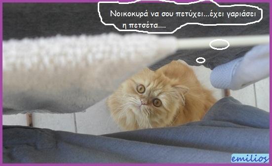 """Οι """"μαύρες"""" σκέψεις μιας γάτας... Μήπως η γάτα έχει κάτι να μας πει; Hhhk023--1"""