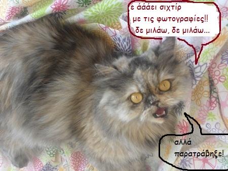 """Οι """"μαύρες"""" σκέψεις μιας γάτας... Μήπως η γάτα έχει κάτι να μας πει; M123---1"""