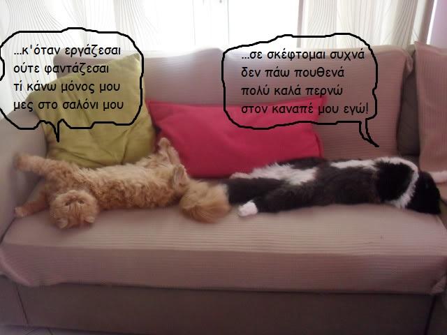 """Οι """"μαύρες"""" σκέψεις μιας γάτας... Μήπως η γάτα έχει κάτι να μας πει; - Σελίδα 3 U015-1"""
