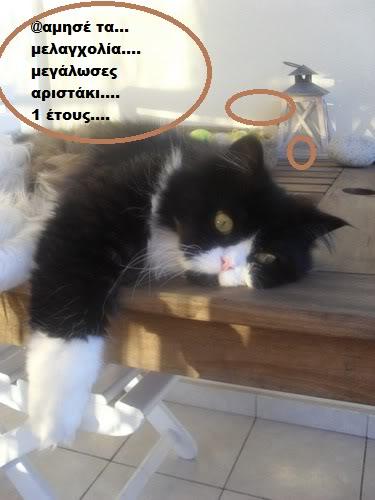 """Οι """"μαύρες"""" σκέψεις μιας γάτας... Μήπως η γάτα έχει κάτι να μας πει; Y006-"""