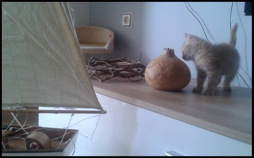 Τα μαρμελάδια ψάχνουν σπίτι! - Σελίδα 2 4_zpsrze8tqko