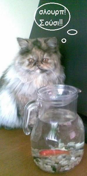 """Οι """"μαύρες"""" σκέψεις μιας γάτας... Μήπως η γάτα έχει κάτι να μας πει; - Σελίδα 2 Aaaww--"""