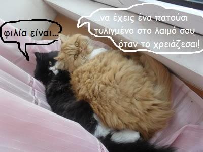 """Οι """"μαύρες"""" σκέψεις μιας γάτας... Μήπως η γάτα έχει κάτι να μας πει; - Σελίδα 3 -001-1"""