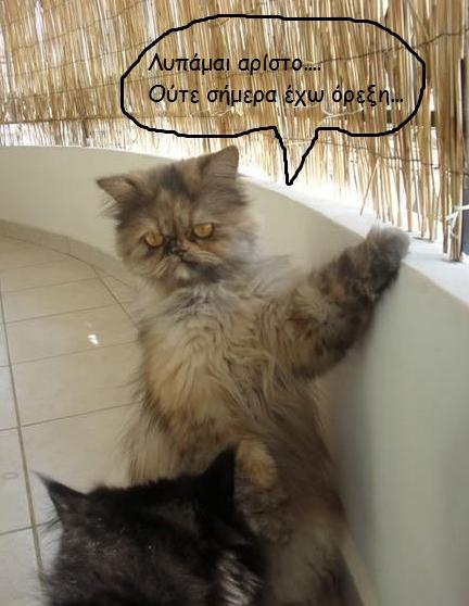 """Οι """"μαύρες"""" σκέψεις μιας γάτας... Μήπως η γάτα έχει κάτι να μας πει; 11"""