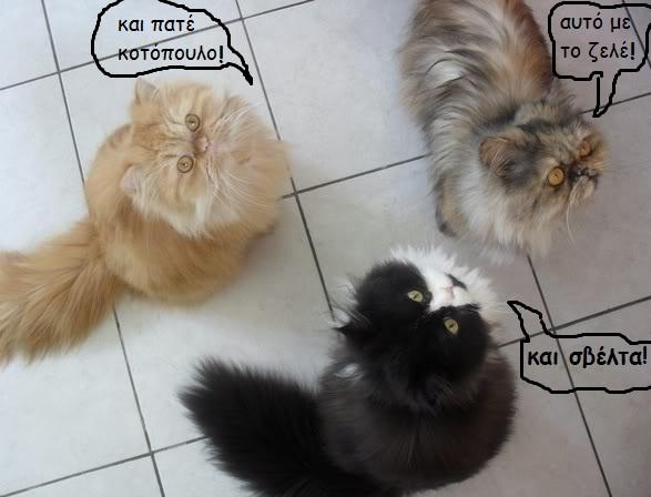 """Οι """"μαύρες"""" σκέψεις μιας γάτας... Μήπως η γάτα έχει κάτι να μας πει; - Σελίδα 3 17-2047-"""