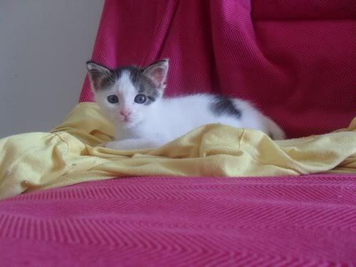 Xαρίζονται 2 φουντωτά γατάκια, 30ημερών ! - Σελίδα 10 22-4004--
