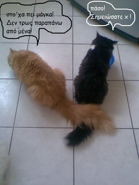 """Οι """"μαύρες"""" σκέψεις μιας γάτας... Μήπως η γάτα έχει κάτι να μας πει; - Σελίδα 3 283-1"""