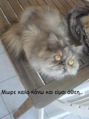 """Οι """"μαύρες"""" σκέψεις μιας γάτας... Μήπως η γάτα έχει κάτι να μας πει; 3-4"""