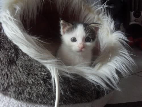 Xαρίζονται 2 φουντωτά γατάκια, 30ημερών ! - Σελίδα 8 3