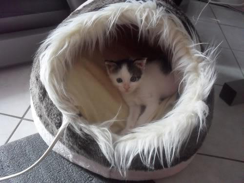 Xαρίζονται 2 φουντωτά γατάκια, 30ημερών ! - Σελίδα 8 4
