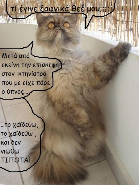 """Οι """"μαύρες"""" σκέψεις μιας γάτας... Μήπως η γάτα έχει κάτι να μας πει; 444016o"""
