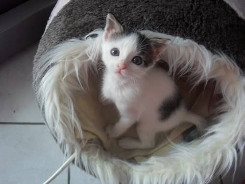 Xαρίζονται 2 φουντωτά γατάκια, 30ημερών ! - Σελίδα 9 5