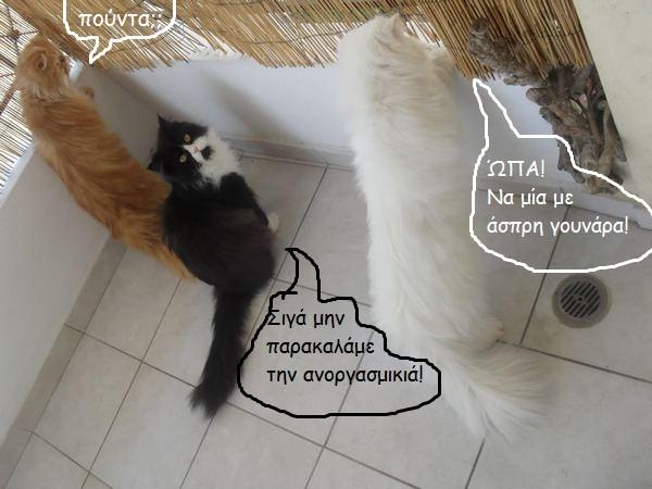 """Οι """"μαύρες"""" σκέψεις μιας γάτας... Μήπως η γάτα έχει κάτι να μας πει; 86055--"""