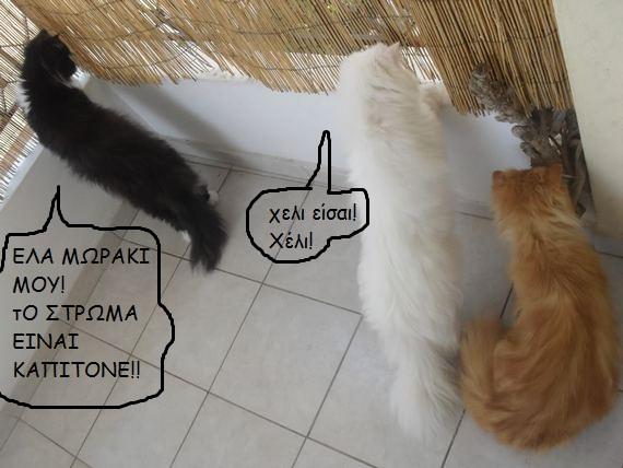 """Οι """"μαύρες"""" σκέψεις μιας γάτας... Μήπως η γάτα έχει κάτι να μας πει; 86060--"""
