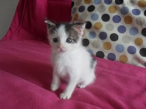 Xαρίζονται 2 φουντωτά γατάκια, 30ημερών ! - Σελίδα 8 999008-