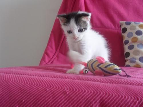 Xαρίζονται 2 φουντωτά γατάκια, 30ημερών ! - Σελίδα 8 999010-