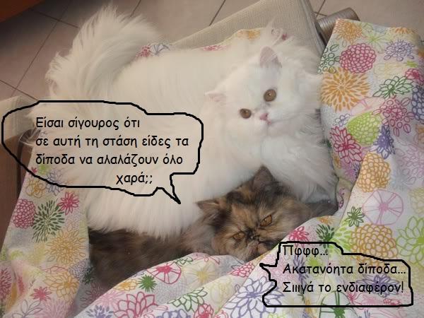 """Οι """"μαύρες"""" σκέψεις μιας γάτας... Μήπως η γάτα έχει κάτι να μας πει; SAM_0385600--1"""