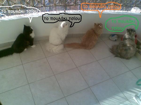 """Οι """"μαύρες"""" σκέψεις μιας γάτας... Μήπως η γάτα έχει κάτι να μας πει; - Σελίδα 3 Cf4049c3"""