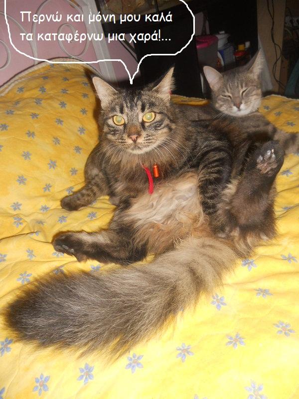 """Οι """"μαύρες"""" σκέψεις μιας γάτας... Μήπως η γάτα έχει κάτι να μας πει; Dscn6516f"""