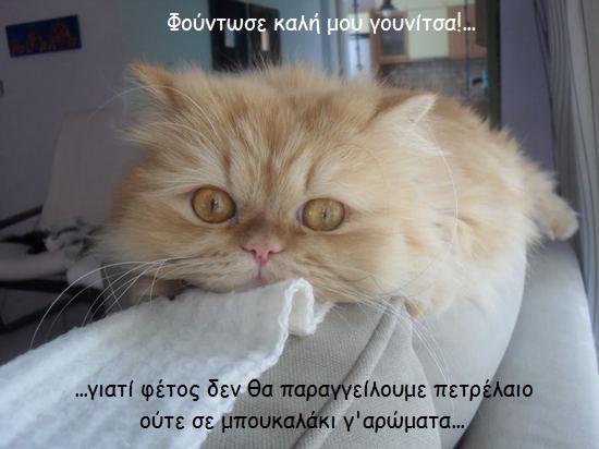 """Οι """"μαύρες"""" σκέψεις μιας γάτας... Μήπως η γάτα έχει κάτι να μας πει; - Σελίδα 2 Emiii"""