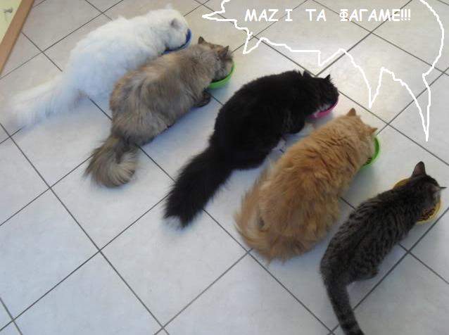 """Οι """"μαύρες"""" σκέψεις μιας γάτας... Μήπως η γάτα έχει κάτι να μας πει; - Σελίδα 3 Hgfd"""