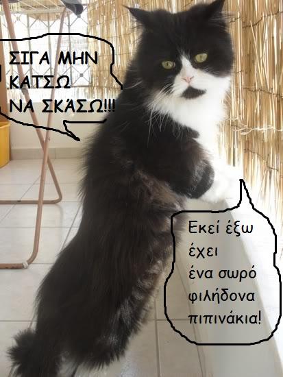 """Οι """"μαύρες"""" σκέψεις μιας γάτας... Μήπως η γάτα έχει κάτι να μας πει; Iiiiii040-550"""