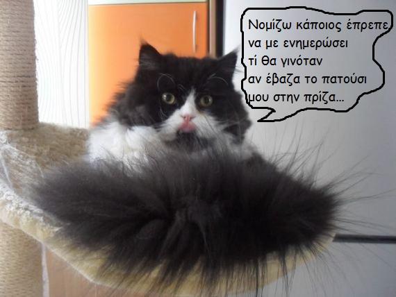 """Οι """"μαύρες"""" σκέψεις μιας γάτας... Μήπως η γάτα έχει κάτι να μας πει; - Σελίδα 3 Iiiiiiii016---1"""