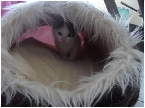 Xαρίζονται 2 φουντωτά γατάκια, 30ημερών ! - Σελίδα 8 Uuu007---