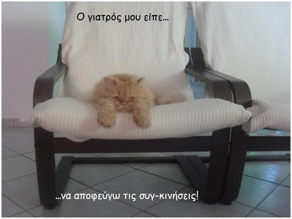 """Οι """"μαύρες"""" σκέψεις μιας γάτας... Μήπως η γάτα έχει κάτι να μας πει; - Σελίδα 3 Zsgfp023-"""