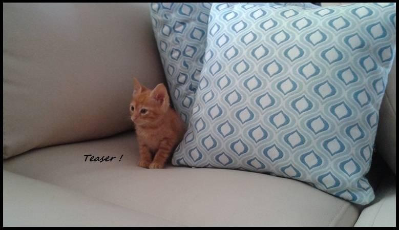 Τeaser, το πειραχτήρι... ψάχνει το δικό του σπίτι! 12_zpse00cqfys
