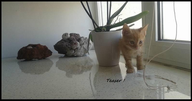 Τeaser, το πειραχτήρι... ψάχνει το δικό του σπίτι! 1_zpsbxxeslzy