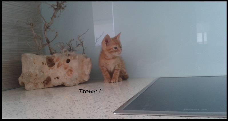 Τeaser, το πειραχτήρι... ψάχνει το δικό του σπίτι! 9_zpsoiaxyrho